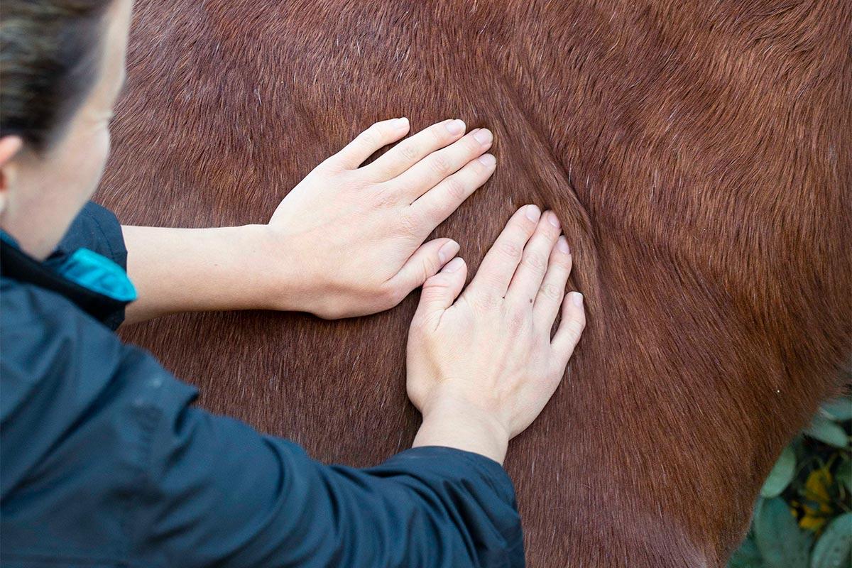 Kvinna masserar häst