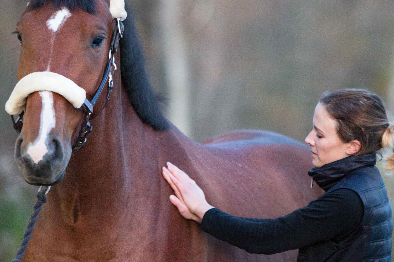 Kvinna som masserar häst